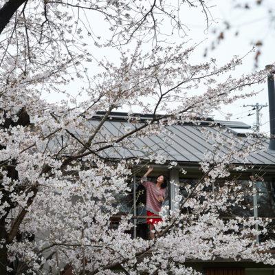 sakura at home(chagocoro)2021